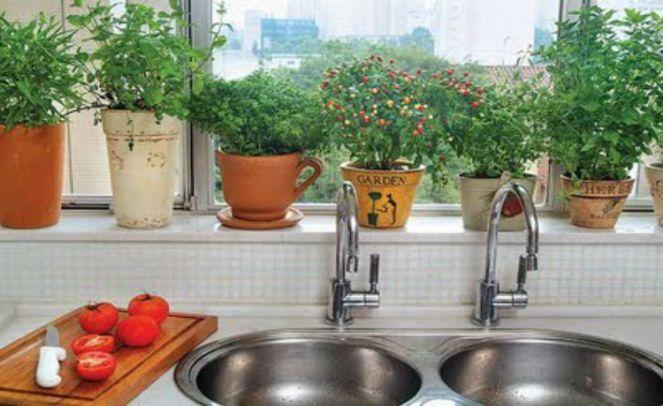 plantas-em-casa-750